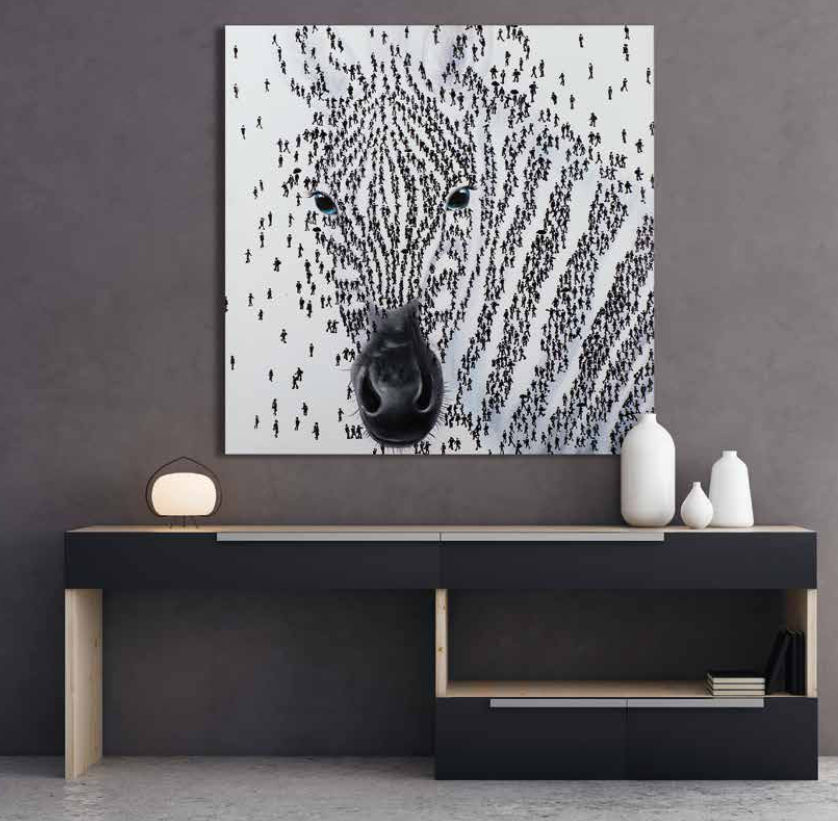 Bild Zebra 02