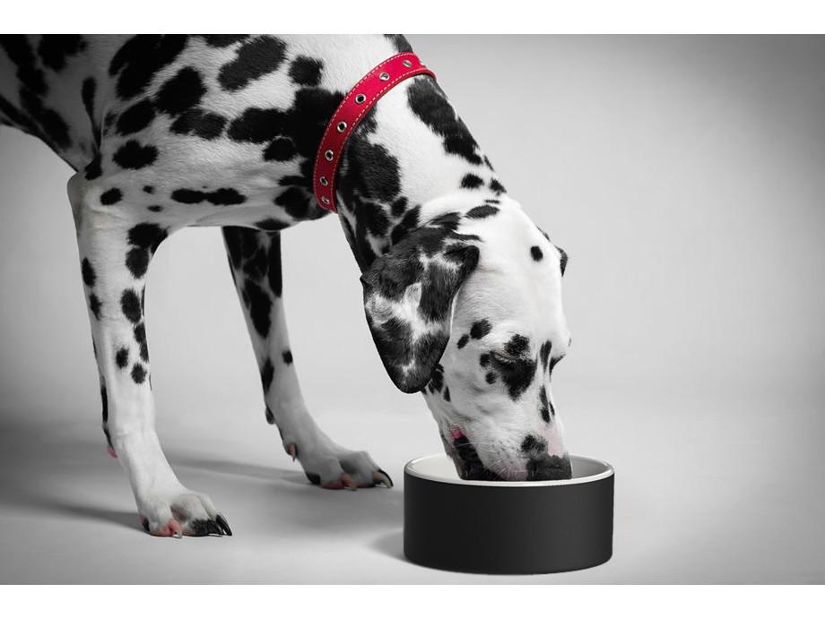 MAGISSO Pet Bowl, Bone (20 cm)  09